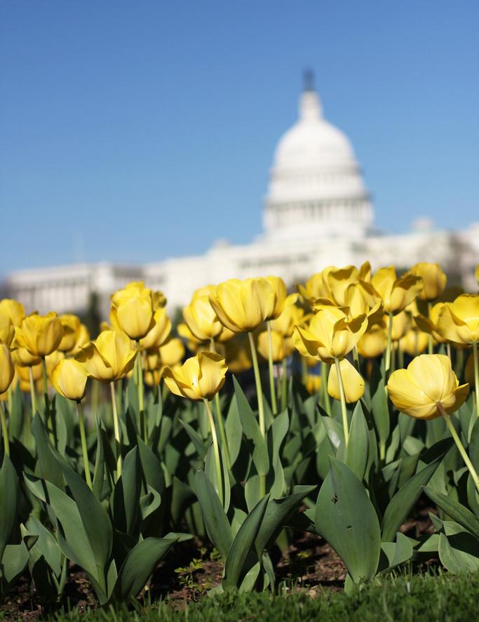 capitol-flowers